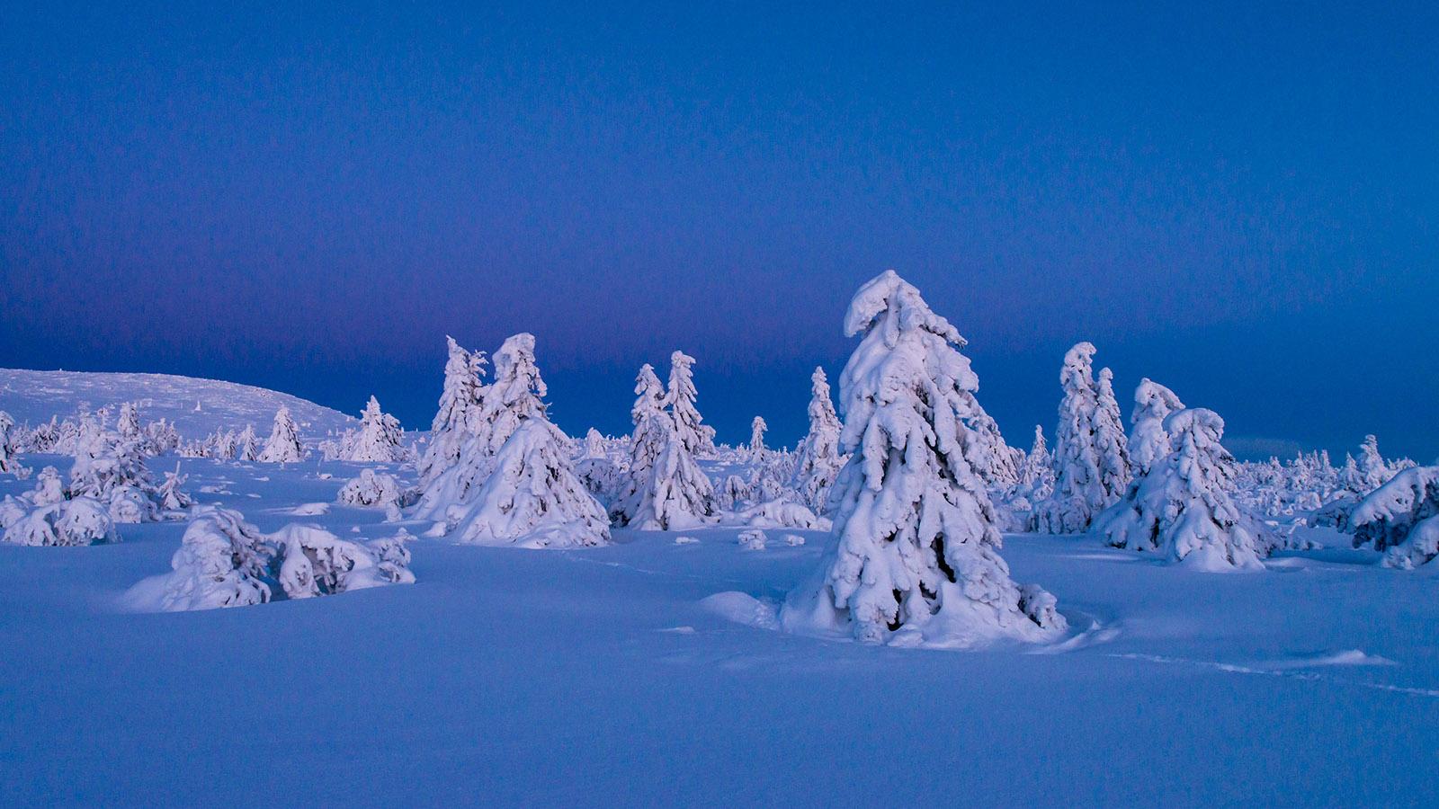 Foto: Øistein Rune Hansen