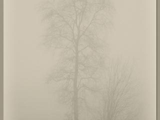 Foto: Roy Arne Kollerud