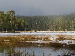 Foto: Svein Nymoen