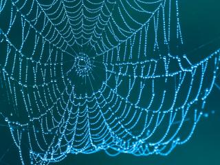 Oktober: Spindelvev